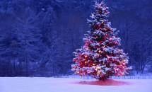 PROBĚHLO Vánoční sbírka